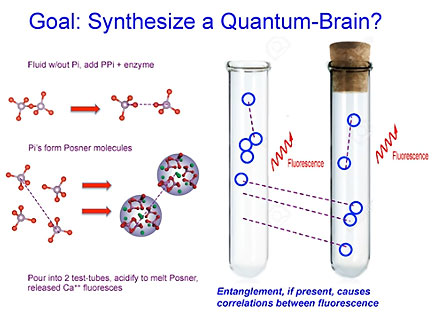 Synthesize a Quantum Brain